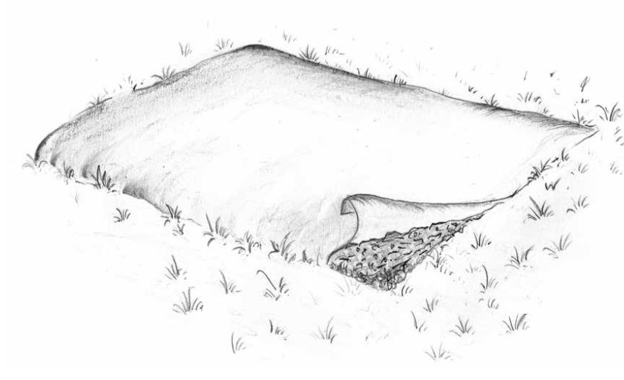 Das Bodenleben nimmt sich den Mist unter der Plastikfolie vor und lässt ganz nebenbei das Gras verschwinden