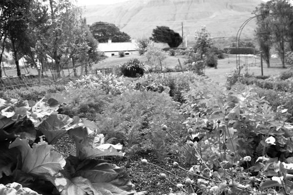 Gemischte Kulturen im Garten - das ist Mischkultur genug